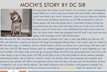 Mochi - Adopted! / 6 yr - Sesame - Male - Shiba Inu