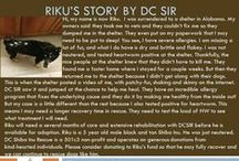 Riku - Adopted! / Male - 5 Years Old - Black and Tan - Special Medical Needs - Follow his story here: http://on.fb.me/1jL251p