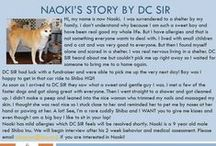 Naoki - Adopted! / Male - 9 Years Old - Red - Follow his story here: http://on.fb.me/1LYxxPb