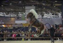spectacle de chevaux / Spectacle équestre avec la troupe Majaz'l et leurs Comtois