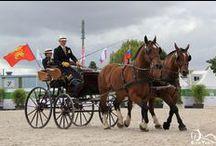 Attelage / Le cheval en attelage en loisir, en compétition et au travail.