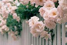 • garden ideas •