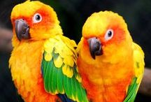 <3 PARROTS<3 macaws) birds/ Budgies <---... d(^v^)b <(^v^)> / Birds in general,parrots the so-called Macaws=biggest parrot of em all,budgies where my <3 is...(blue hyacinth macaw which is rare nowadays cuz of extinction""