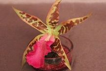 Kallyflore / Compositions florales artificielles