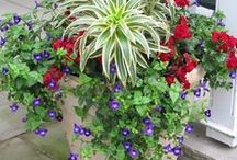 Container gardens / by Michelle Hambly