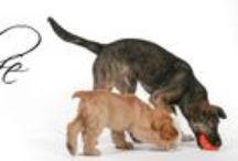 """Dog Life / A nuestros entrañables amigos """"Peludos"""""""