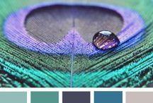 Colorimétrie et organisation