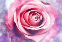 My - Favorite ♡ Pink ♡ / Pink décor, art, flowers, quotes, fashion... Breast Cancer Awareness!! I am a REDHEAD that loves pink and I look good in it too.  / by Lindsey R. Thomas