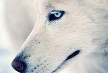 Mon p´tit loup