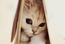 cute!!!!!!!!!! / <3 Love animals <3