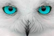I love owl.....<3