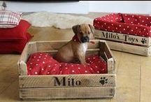 Koirien asuminen / Unelmieni kodissa on myös oma huone koirille, tässä ideoita siihen.
