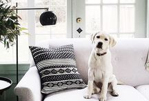 Doggies in interiors