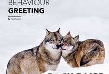 Articles by Tim Plowden / Articles by Tim Plowden including regular contributions to Wildlife Photographic Magazine. More info: http://www.timplowden.co.uk/