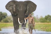 Kenya, East Africa / Kenya is the land of the Safaris.