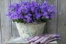 Kesäkukat Summerflowers