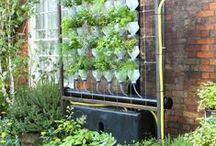 For school garden / W szkolnym ogrodzie