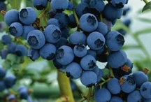 Blueberry Love ♥