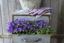 Gardening and Flowers / by CathyTaughinbaugh.com