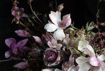 Flowers / by Alba