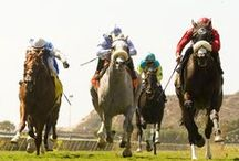 And Away They Go / Horse racing at Del Mar / by Del Mar Racetrack