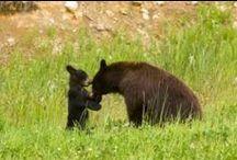 Wildlife in the Smokies / by Smoky Mountains