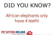 Did you know Pet Facts? / Some fun facts about animals. / by Pet Sitters Ireland