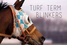 Race Day Tips / Race day insight, tips, and tricks of the trade / by Del Mar Racetrack