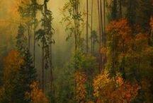 Fall / The splendor of Fall
