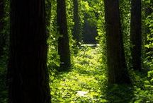 The Forest / the beauty of the forest