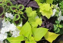 Container Gardens / Beautiful living planted arrangements in stylish containers.