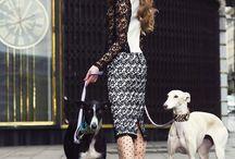 Fashion Dogs Editorial
