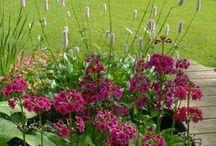 Gable Barn - Bog Garden / Design & Plant Inspiration