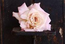 Linia Aurum - Kolekcja Aroma / Dom – pachnący ciepłym obiadem, perfumami ukochanej osoby i świeżymi kwiatami w wazonie. Unoszą się w nim nuty miłości i niepowtarzalny aromat rodzinnych chwil. To właśnie tym zapachem przesiąkamy dogłębnie i dlatego zawsze już będzie on dla nas najpiękniejszym zapachem świata.  www.kronopol.pl   #homedecor #kronopol #aroma
