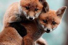 B. BardOt, Sors de Ce CorPs ! / #Pets #Cute #Funny