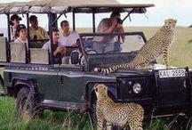 Safari / Discover Kenya