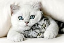 Koty / Ta tablica jest o kotach. :D