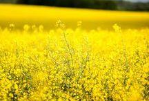 Polska na żółto/ Yellow shades of Poland / Polska mieni się kolorami tęczy. Nie wierzysz? Zobacz. Każdy może edytować tę tablicę - napisz do nas - dodamy Cię jako Pinnera!
