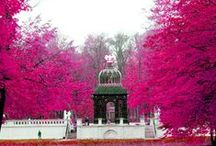 Polska na różowo/ Pink shades of Poland / Polska mieni się wszystkimi kolorami tęczy. Także na różowo. Jest pięknie! Każdy może edytować tę tablicę - napisz do nas - dodamy Cię jako Pinnera!