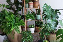 Zimmerpflanzen, Ideen