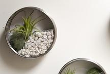 Ideal Home Ideas