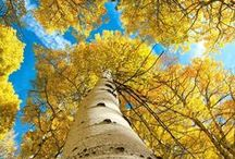 Unbelievable Trees / We just can't pass up these amazing examples from nature.