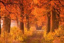 Roadside Trees / The Road Not Taken