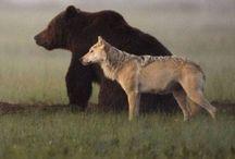 Bears  / Beren