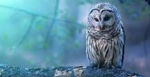 ♥ Night Owls ♥ / Owls