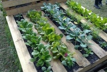 Garden / Freshen up your garden with these flowers, plants, vegetables and more. Garden layout plans and planter ideas.