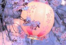 Blushy Pinks