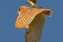 BIRDS / Incredible birds