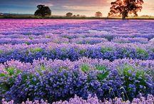Purplelicious