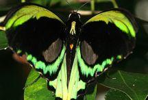 Butterfly / Beautiful butterflies